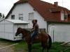 St.-Georgen-Ritt und Tag der offenen Tür, Pferdepartner Franken, 2012