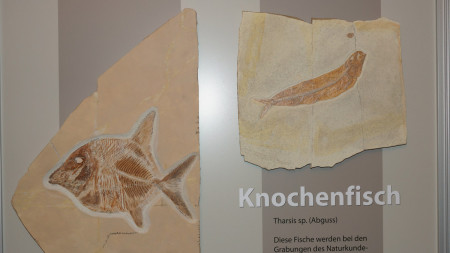 JHV Frankenbund Baunach 2013 - Fossilienausstellung