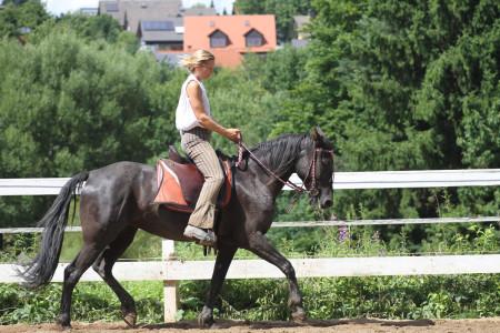 Unfall Pferdepartner Franken Baunach Februar 2013