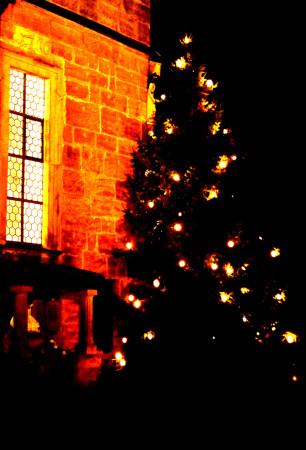 Weihnachtsbaum Ebing 2013