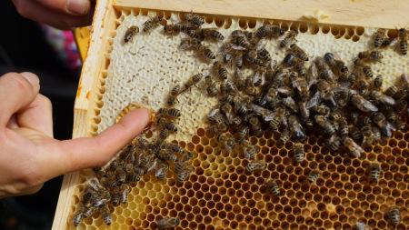 Honigschleudern 2014 (12)