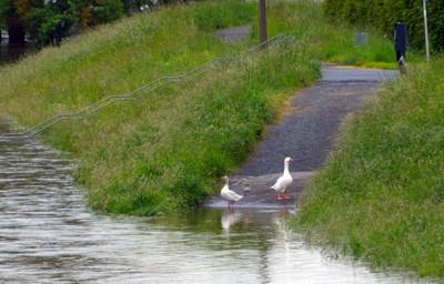 Kemmern Hochwasser 400